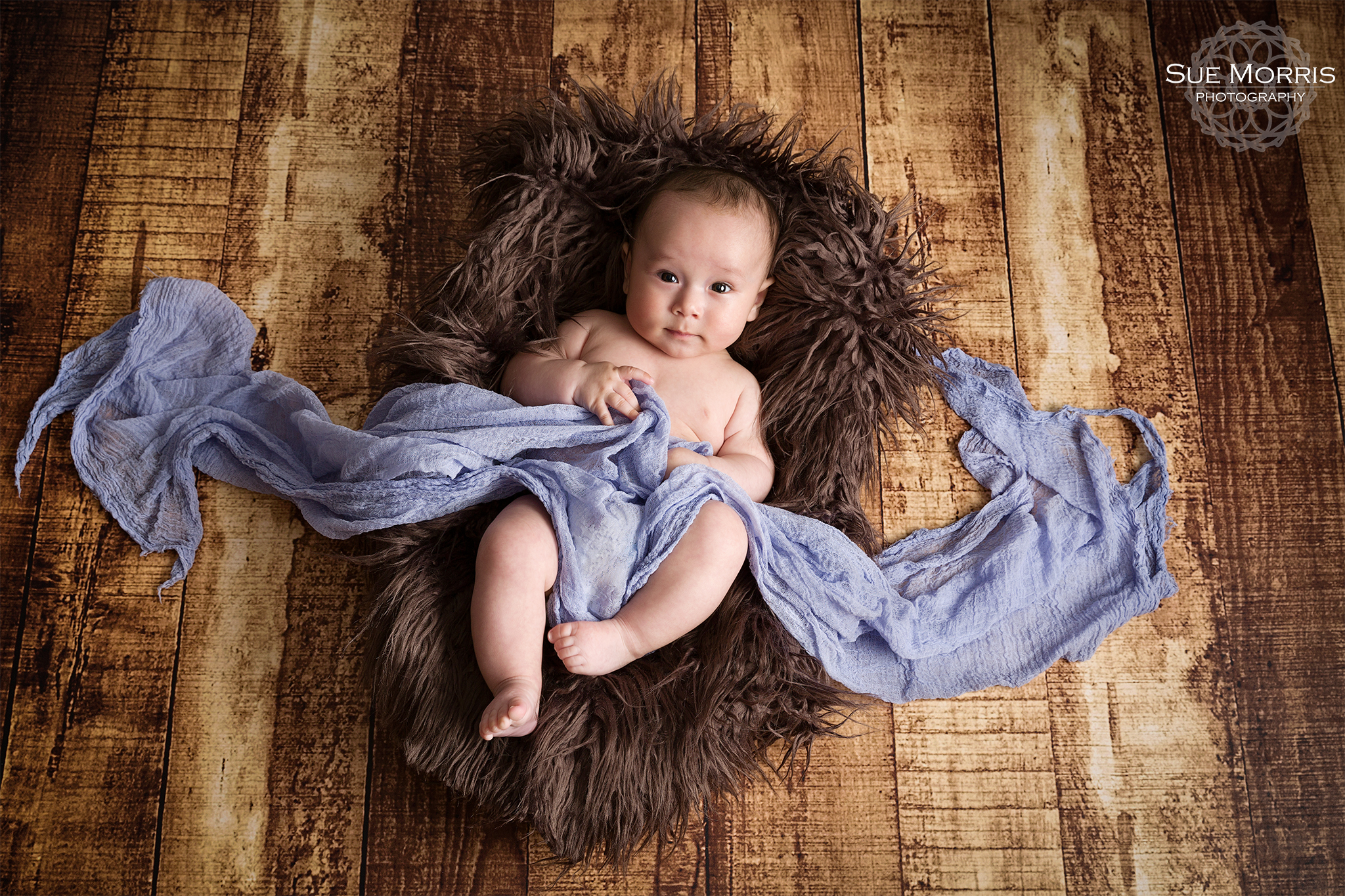Andover Newborn Photographer